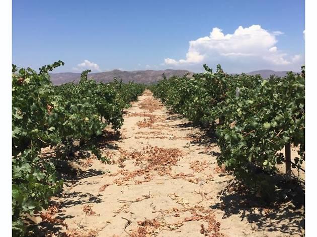 Durand Vinicultura