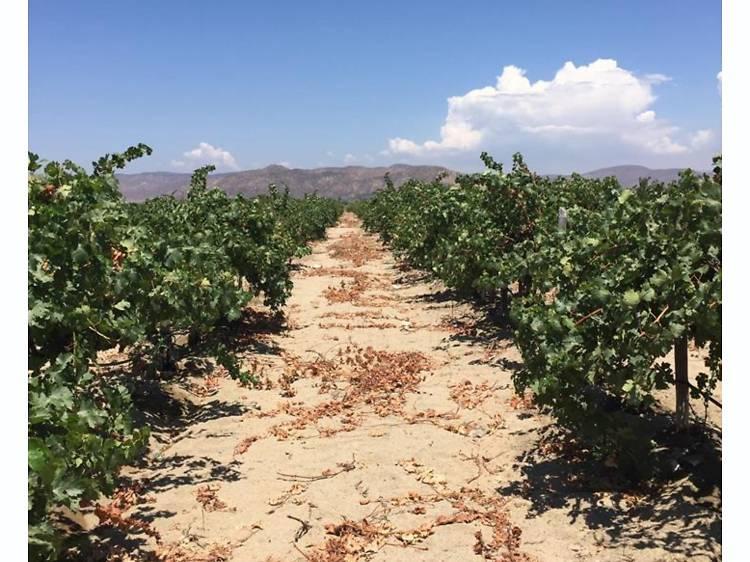 Durand Viticultura