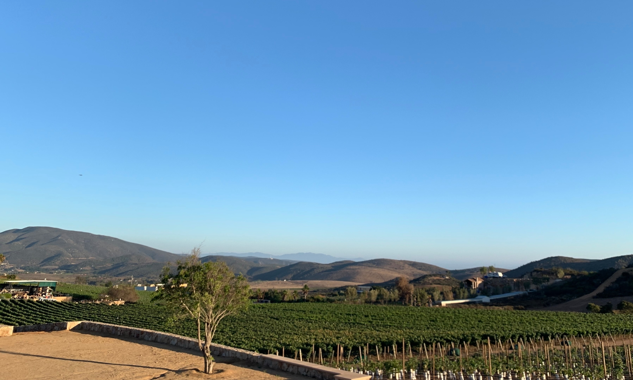 Viñedos y bodegas de vino en Valle de Guadalupe