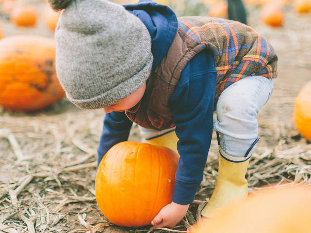 Pumpkin patches to visit with kids