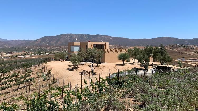 Once Pueblos cocina de Michoacán en Ensenada