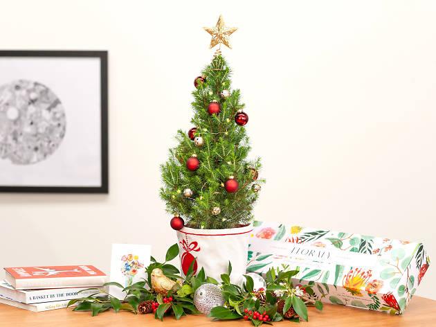 A tiny Christmas tree on a table.