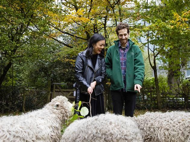 Natural History Museum - sheep