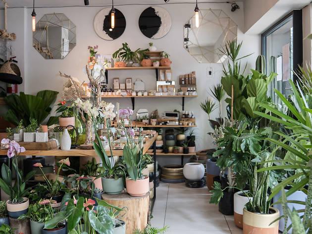 Plantas Querencia