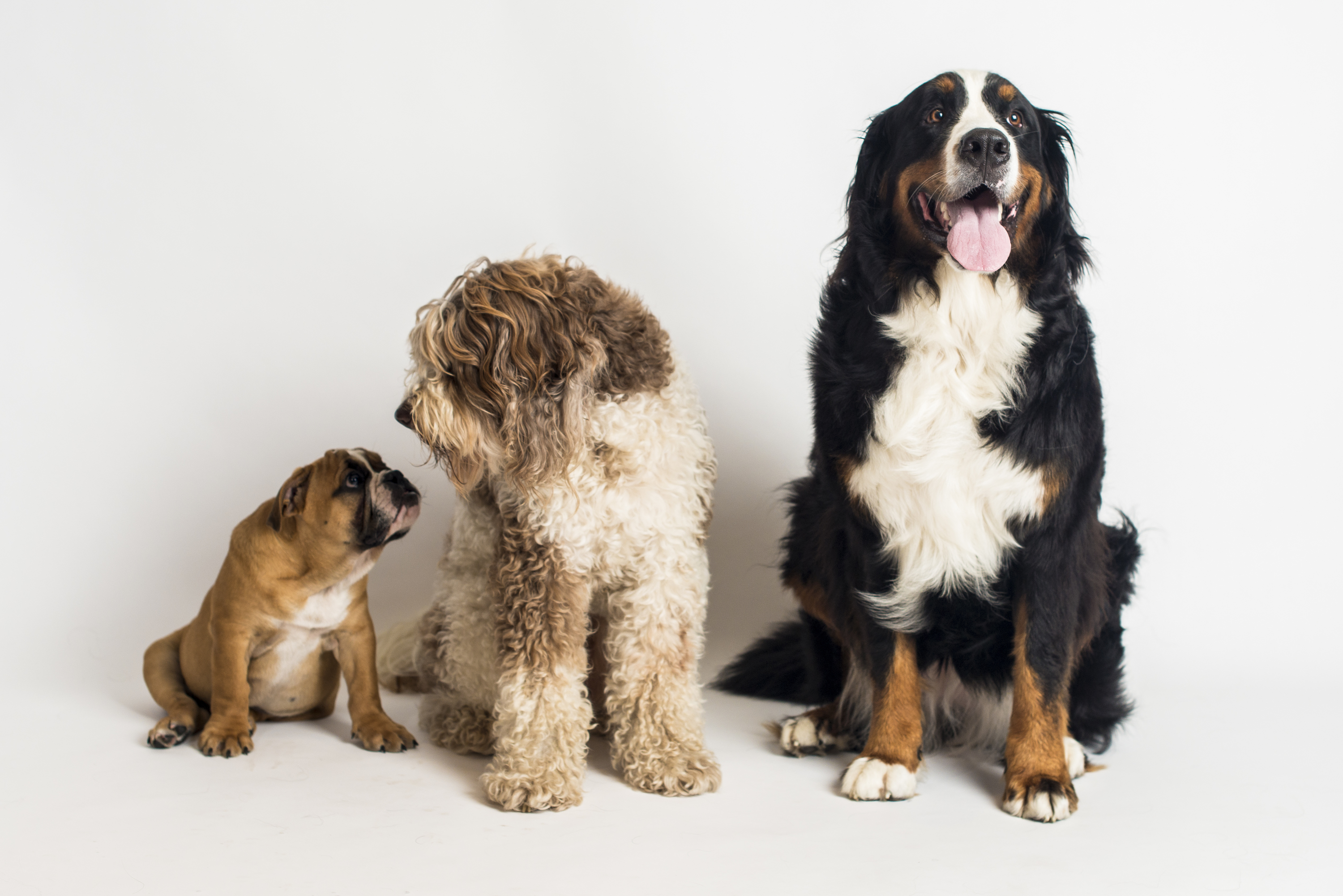 Three dogs standing and sniffing each other.