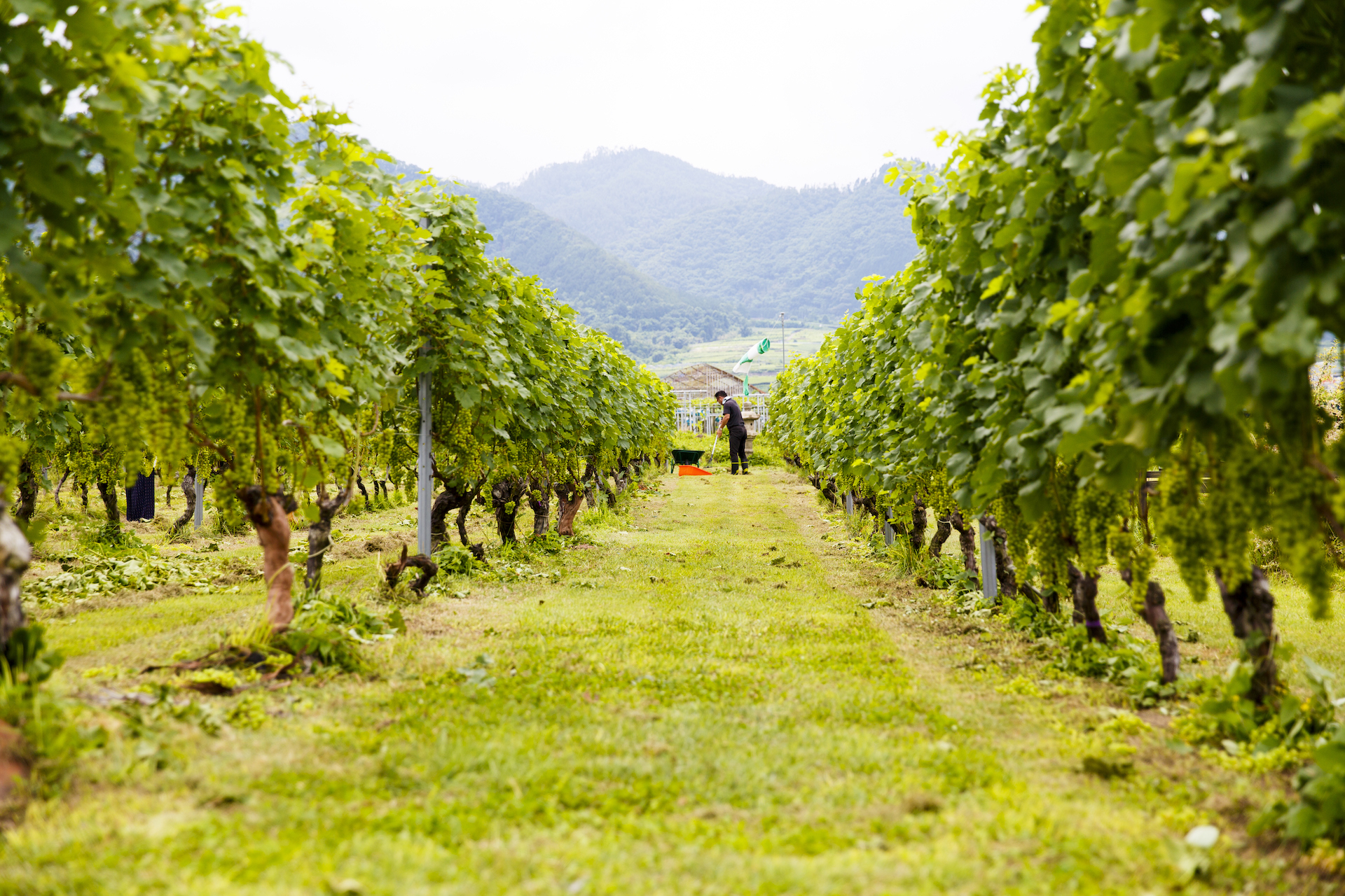 Breweries, wineries and distilleries worth a day trip from Tokyo