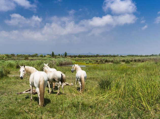 Cavalls al delta del Llobregat