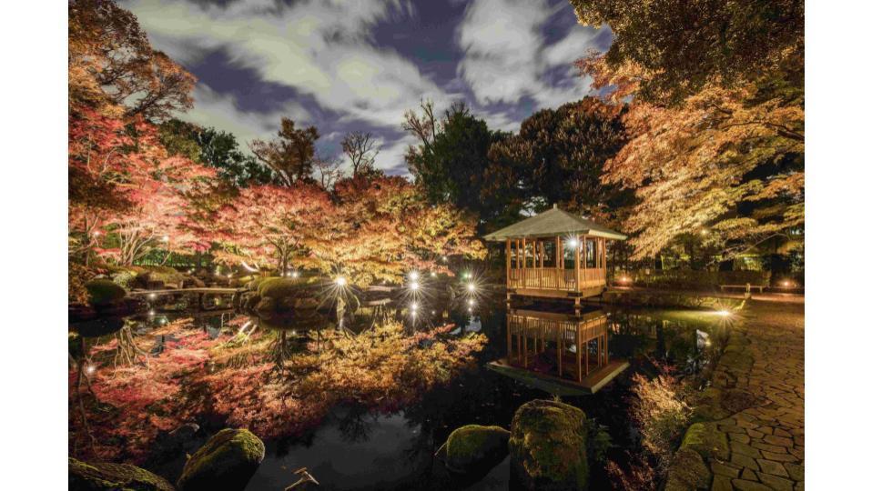 大田黒公園 紅葉ライトアップ