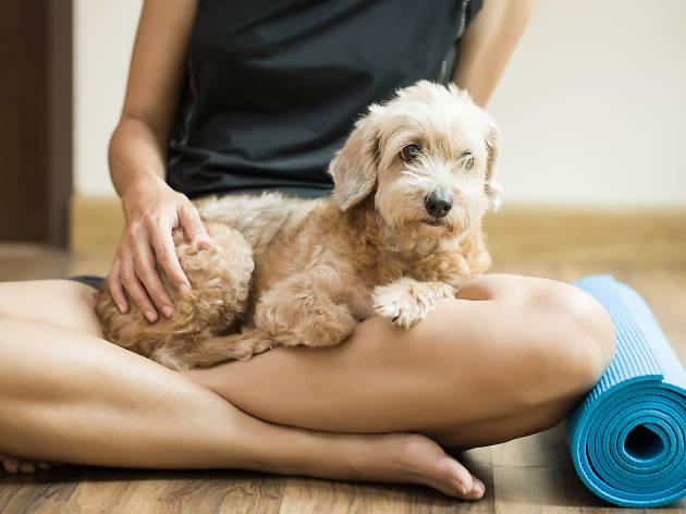 Vuelve el Yoga Dog Day, una ocasión única para practicar yoga con perros en Madrid