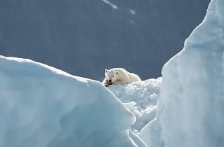 Living Worlds: An Animal Planet Exhibition, polar bear
