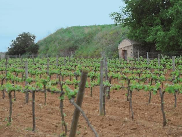 Vall de Rials, Alella