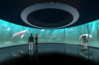 ミズー 川崎水族館