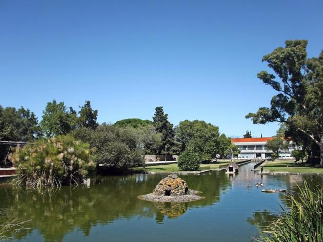 Limpar, plantar, relaxar: um dia ao ar livre para cuidar da floresta de Lisboa