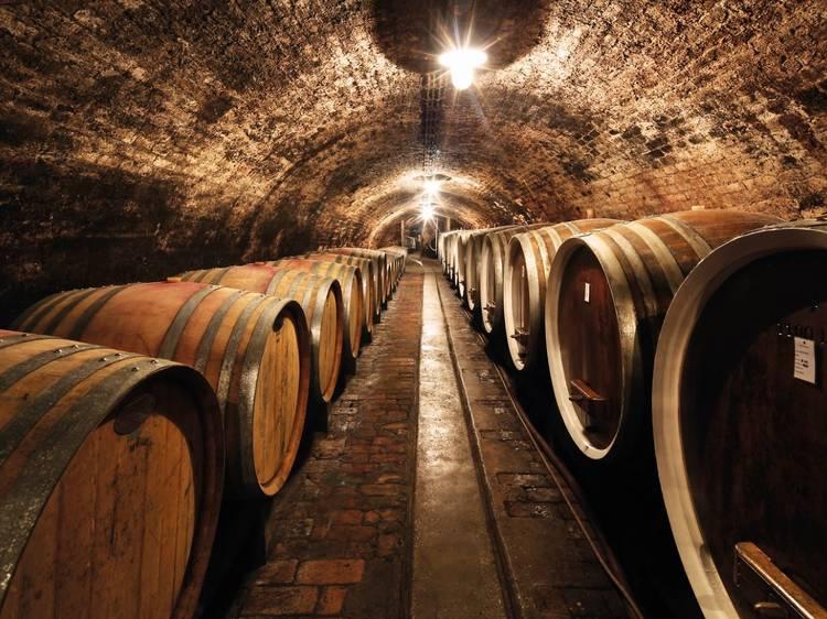 Taste local wines