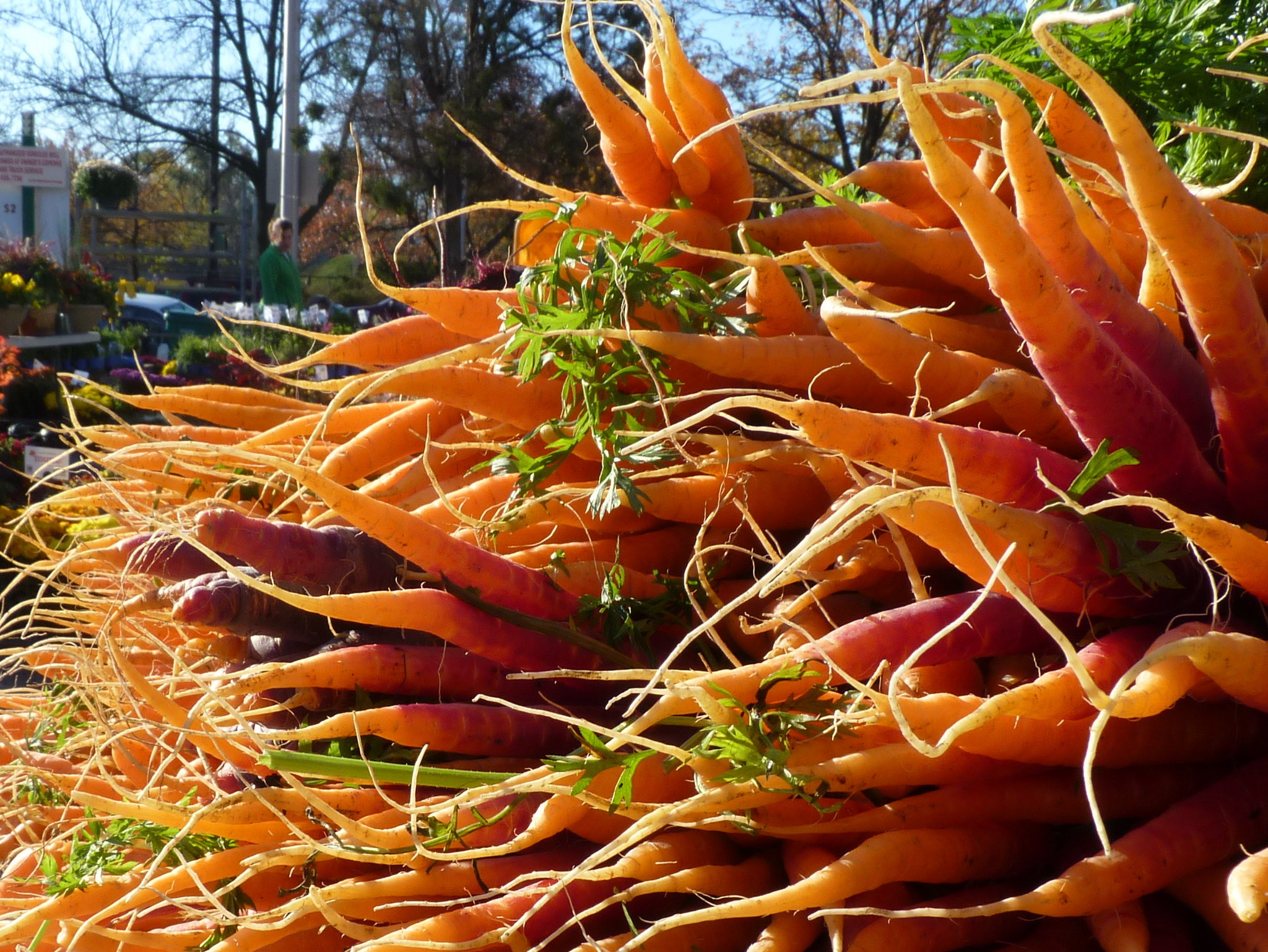 A pile of carrots, skinny end out