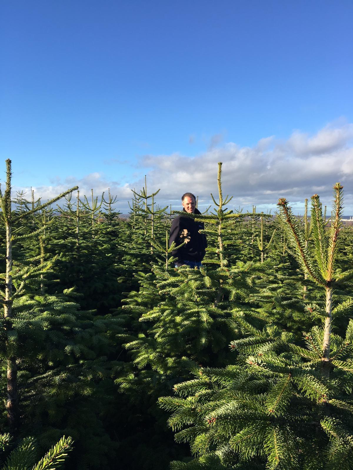 Harold's Park Farm Christmas Trees