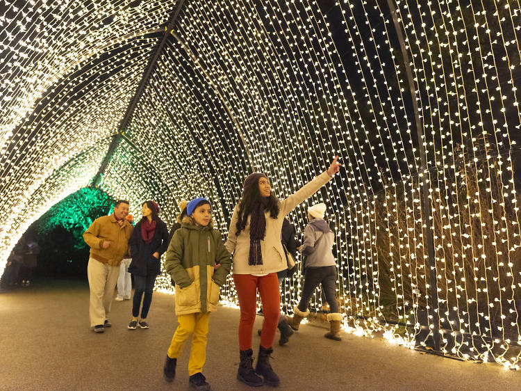 Where to see dazzling Christmas lights in Chicago