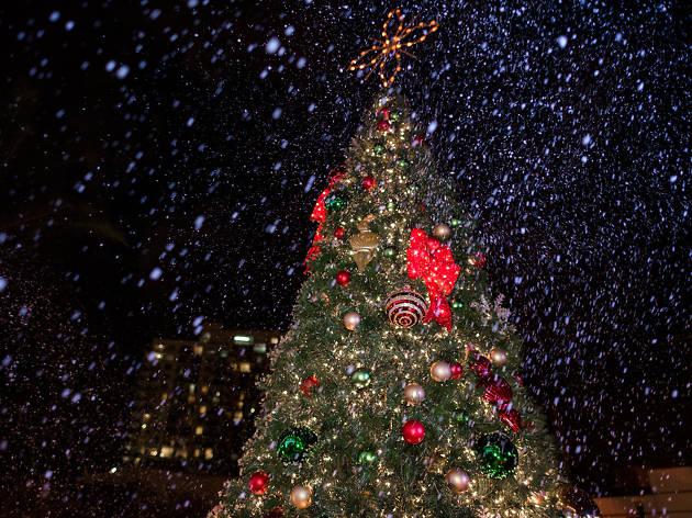 Coconut Grove tree lighting