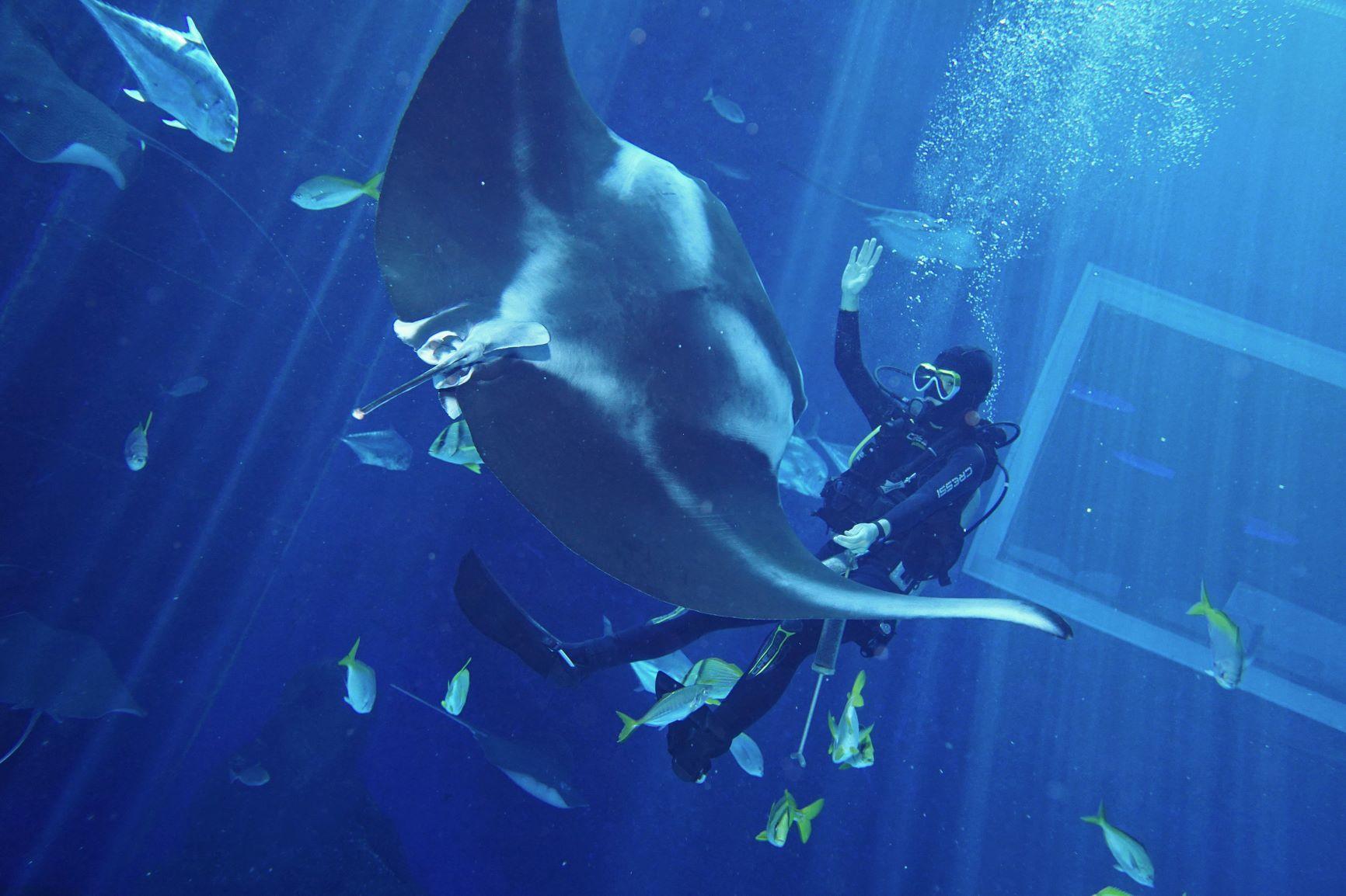 Aquarist Raises His Hands To Cue Mika