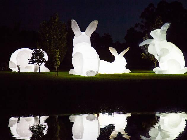 Conills de llum