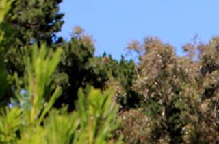 Woman wearing a santa hat walking between pine trees