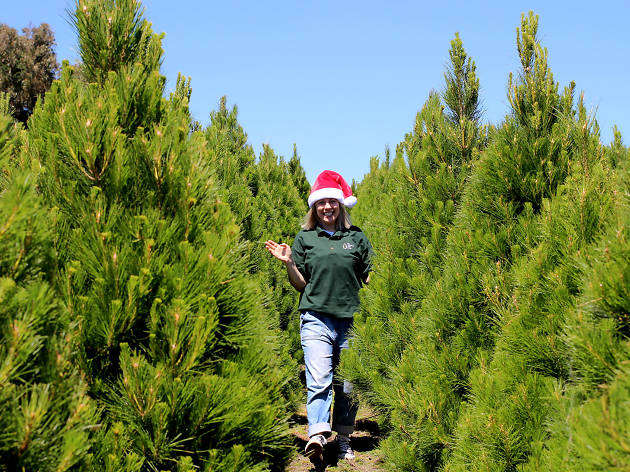 Woman wearing a santa hat walking between pine trees