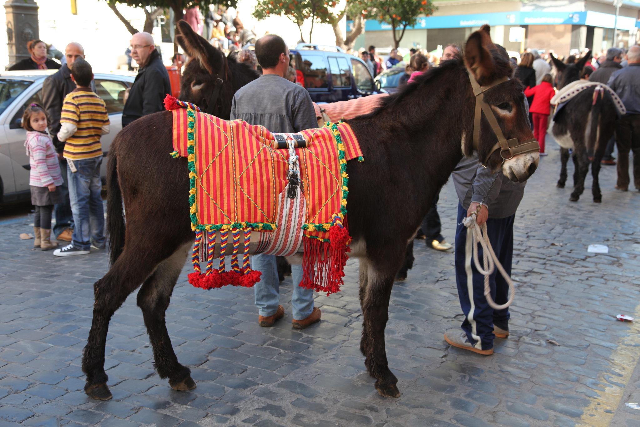 A donkey at fiesta