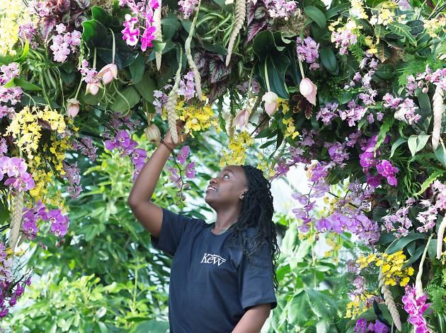 Orchids Festival Royal Botanic Gardens Kew 2018
