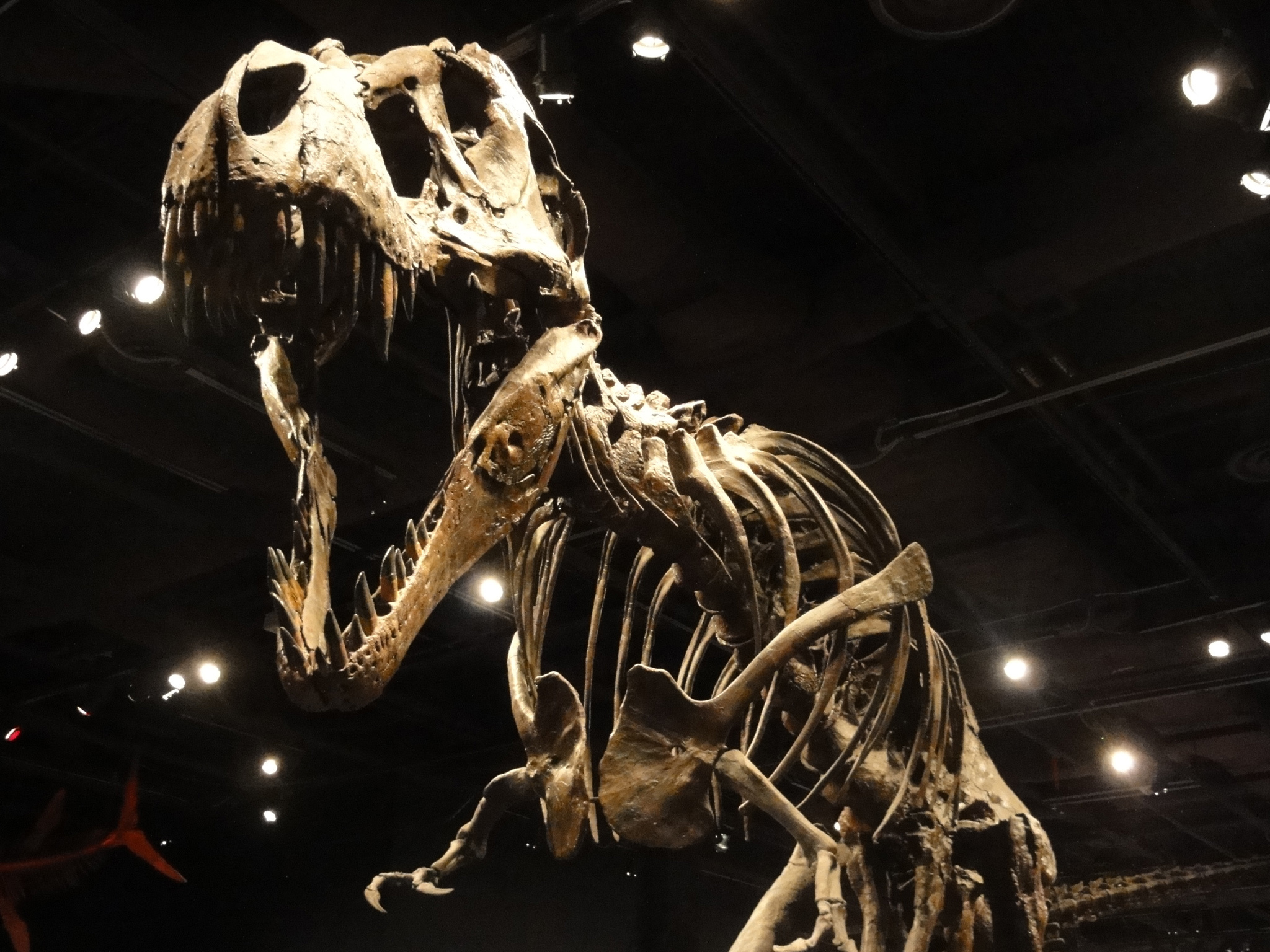 A dinosaur exhibit at Orlando Science Center