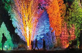 Colours on trees at Botanic Gardens