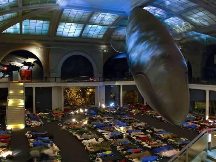 NYC's best museum sleepovers for kids