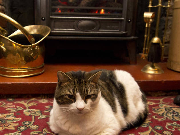 Spitalfields' favourite pub cat Lenny has meowed his last meow
