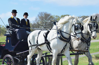 Winter Horse Carriage Rides