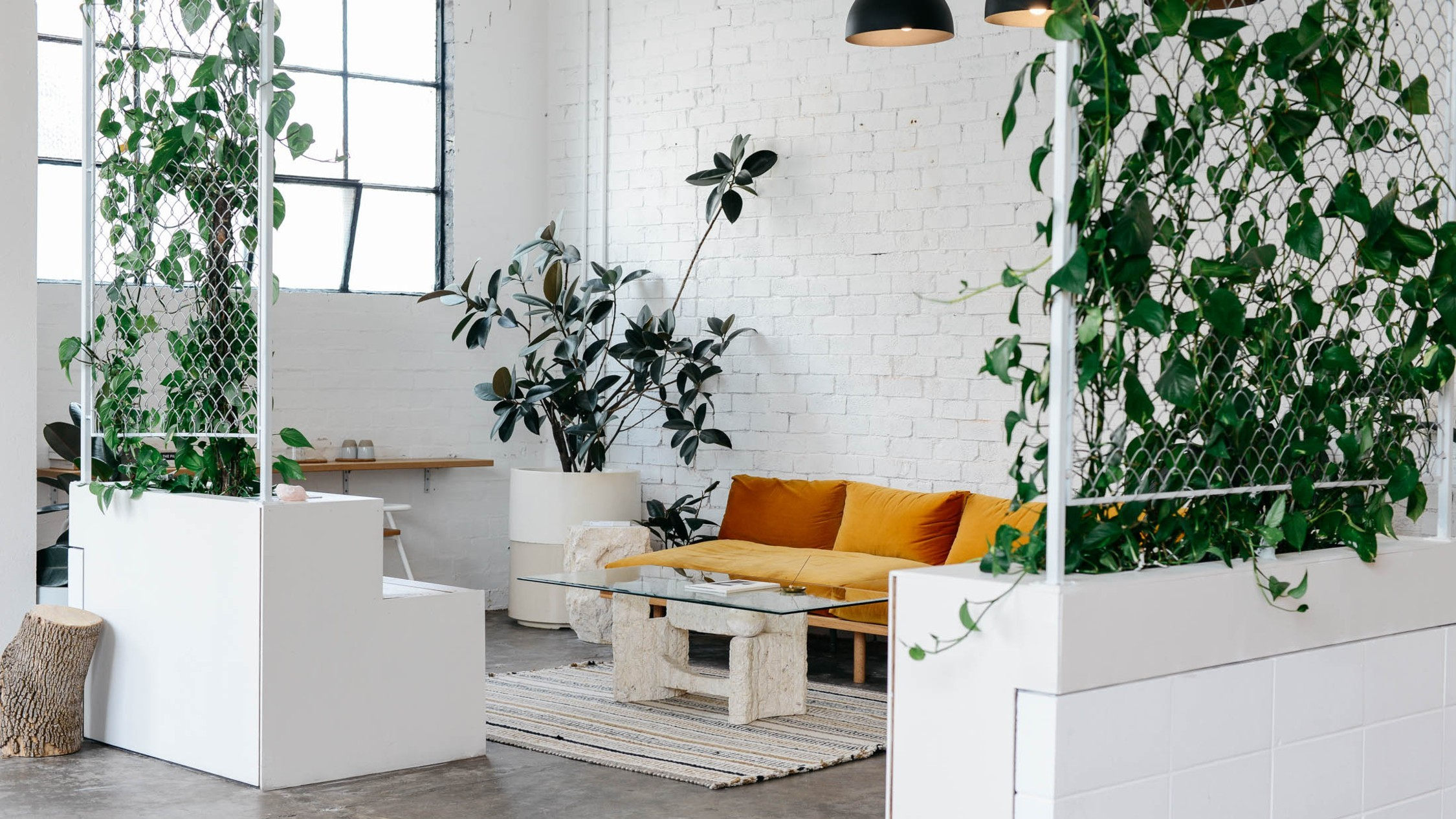 A waiting room with white walls, plants and a mustard yellow couch.