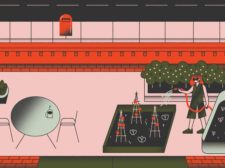 How to grow a Sydney balcony farm in six steps
