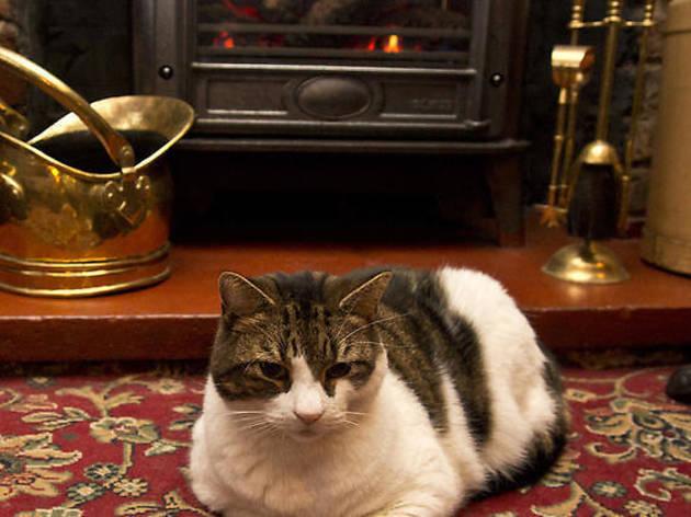 ロンドンで一番有名な猫とお別れ……