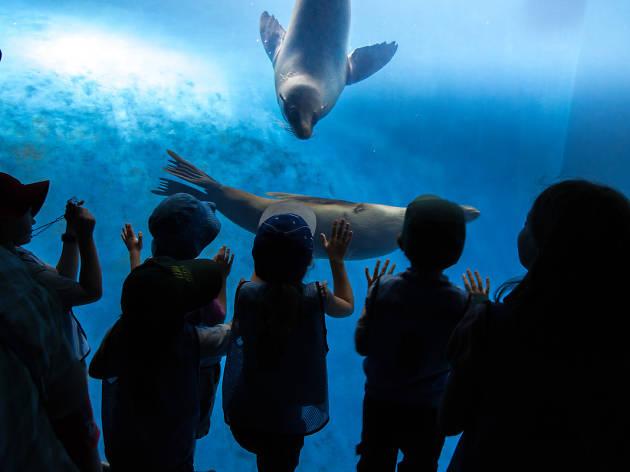 Kids look at seals at the Zoo