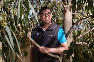 Tour guide Tim Gray stands amongst the leaves of a gum tree.
