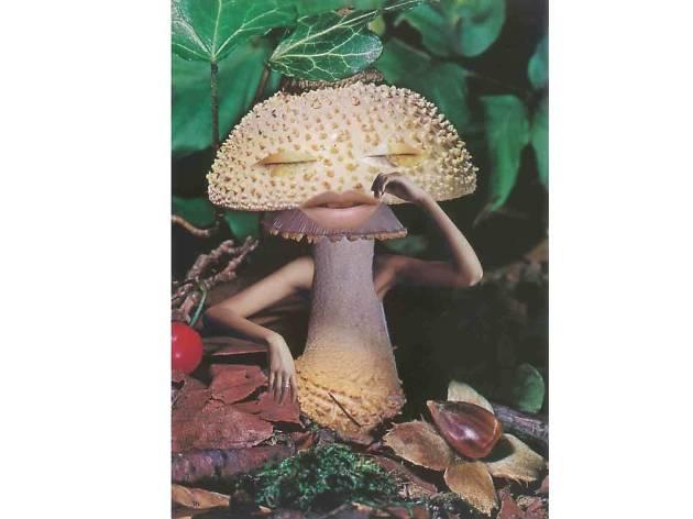 Mushrooms: The Art, Design and Future of Fungi review