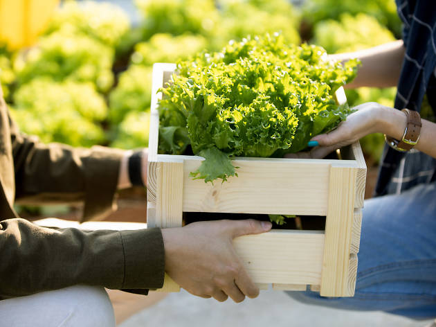 อยู่กลางเมืองก็ปลูกผักกินเองได้ที่ Sansiri Backyard @T77 Community