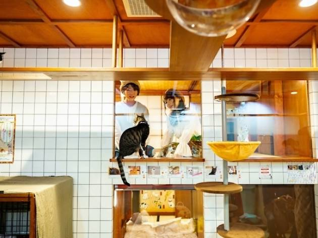 This hotel in Osaka has 16 resident rescue cats