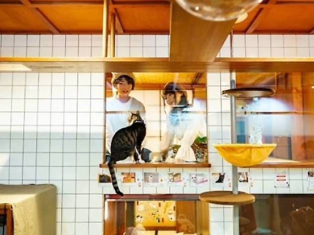 猫を眺めながら眠れるホテルが大阪にオープン