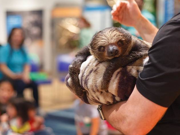 An adorable sloth is visiting this NYC museum