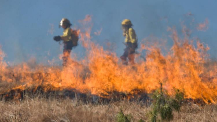 Bushfire crisis pic