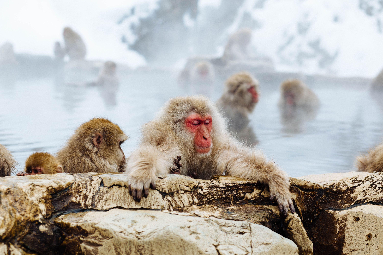 Winter getaways from Tokyo