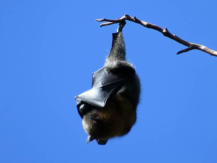 Bat Watching