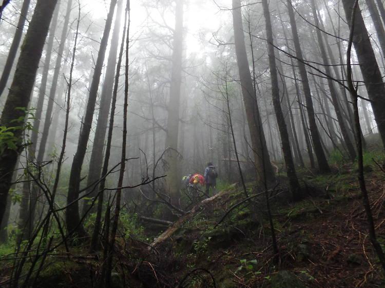 Senderismo en Bosque de la Cañada
