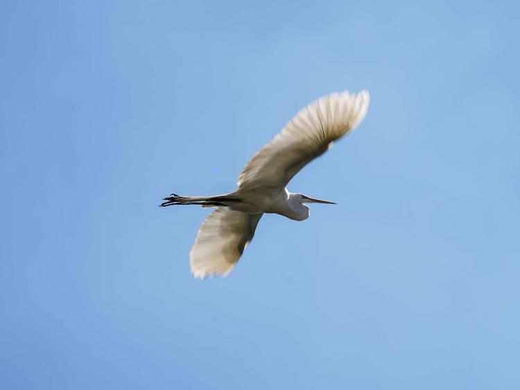 Tótotl Aves y medio ambiente
