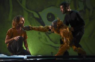 JOJO, història d'un orangutan