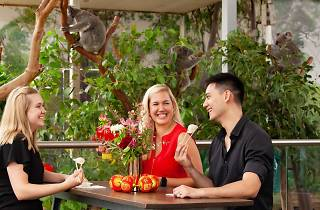 Three people sit at a table eating dumplings next to four koalas snoozing in gum trees.
